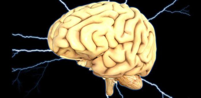 Human Brain - Mind - Nerves