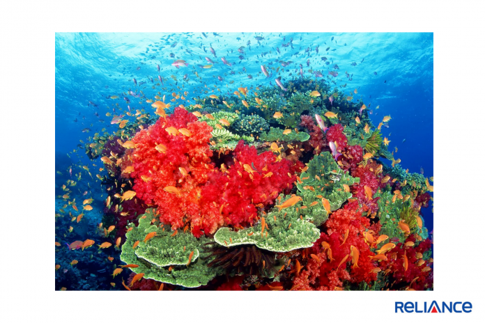 nykdaily-red-algae-coronavirus-marine-research-biologists-arushisana