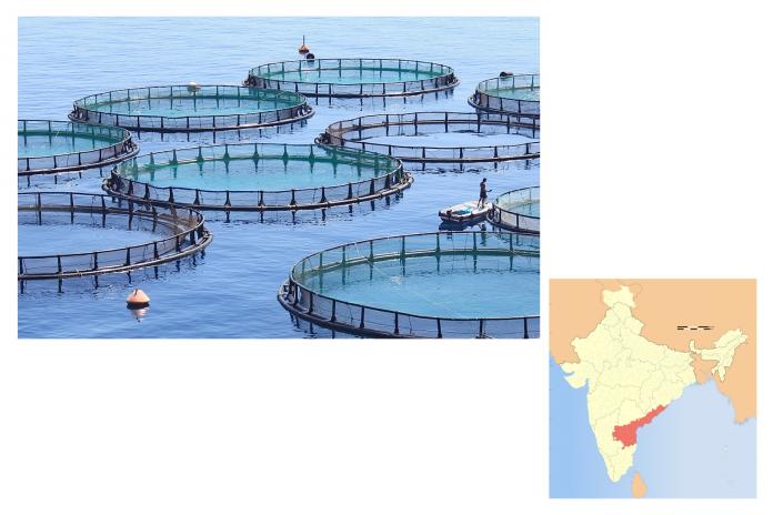 andhra-pradesh-export-aqua-farming-businesses-nykdaily-arushisana