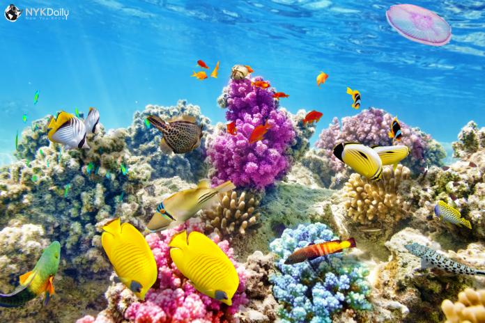 snorkeling-sea-ocean-marine-scuba-diving