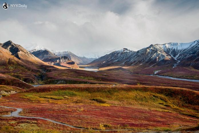 тундра-растительность-наука-аляска-осень