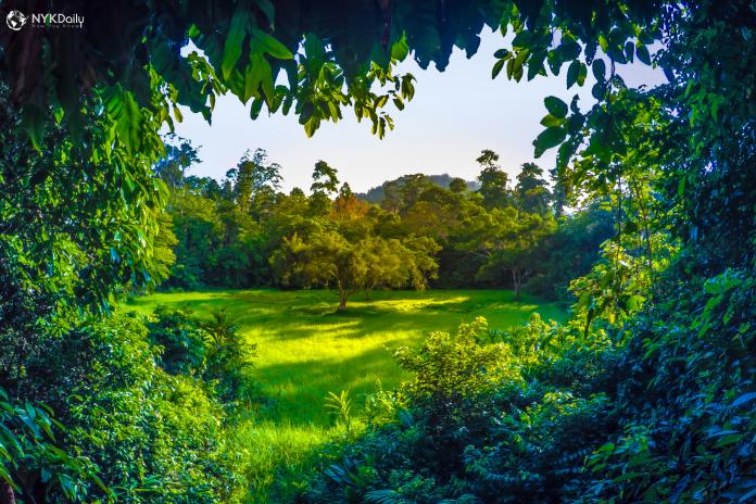 தமன்-நெகாரா