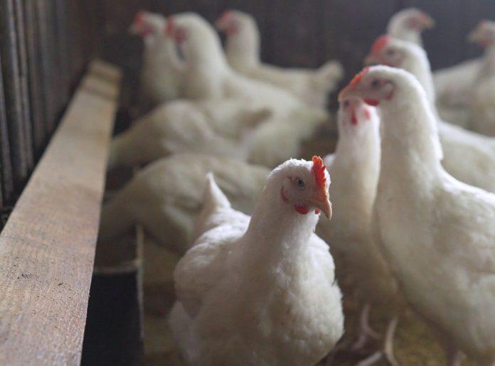 Bird Flu UK