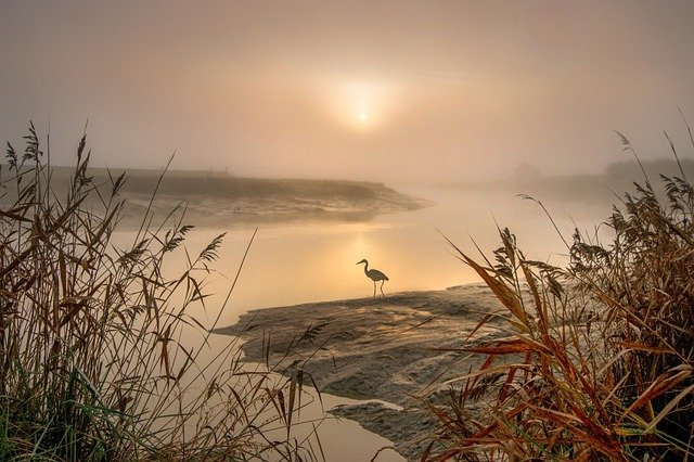 Heron Egret Landscape Photography Feathers Nature Wings
