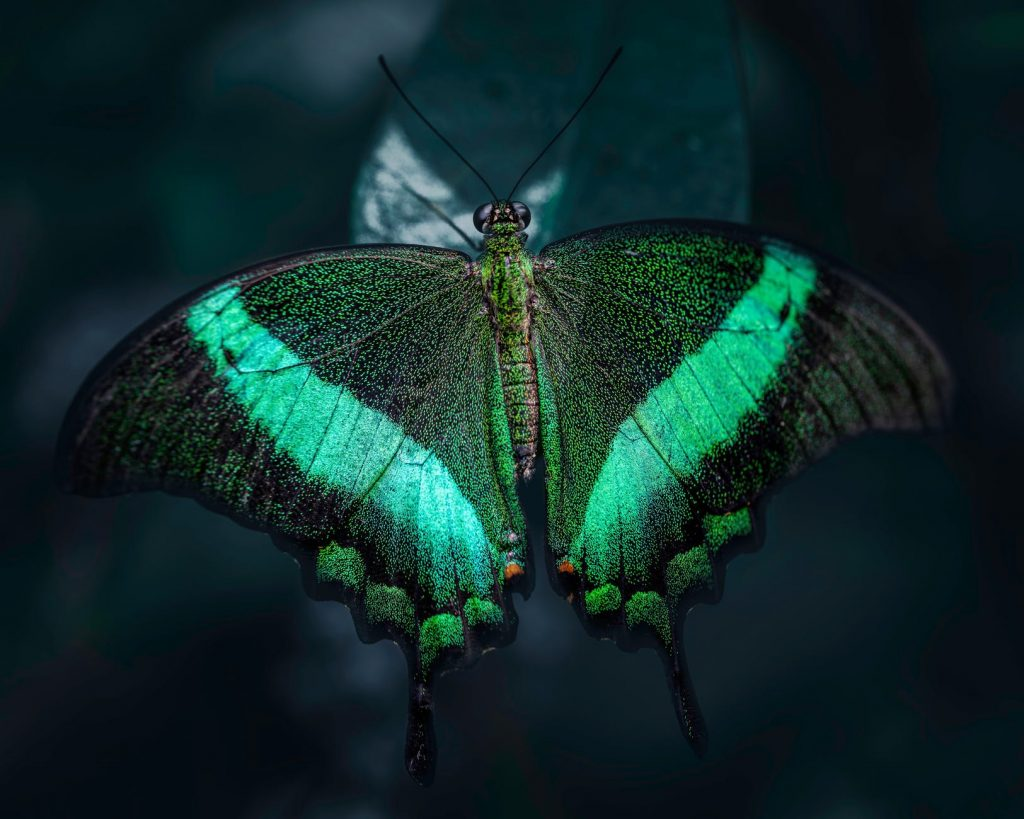 black and green butterfly on leaf