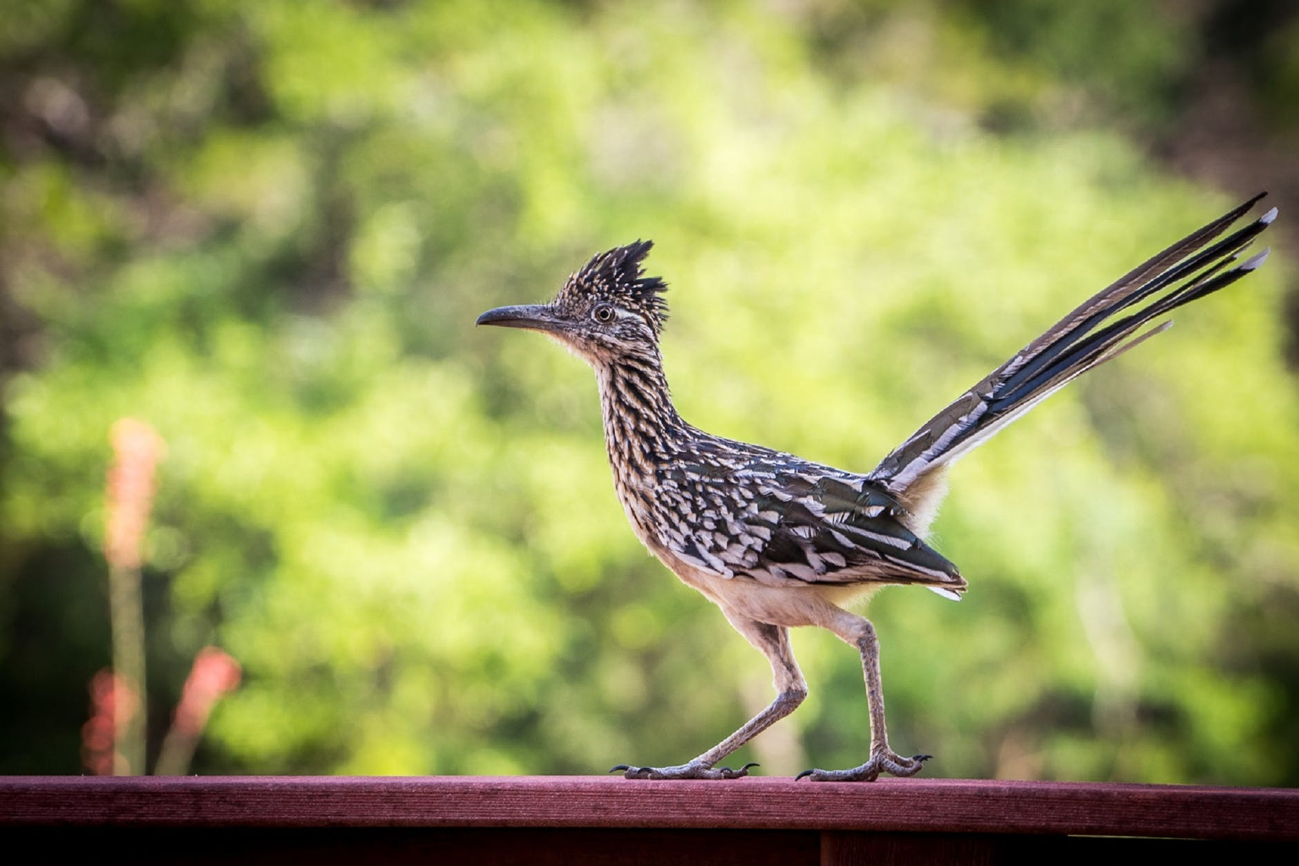 close up photography roadrunner at the top of red surface during daytime