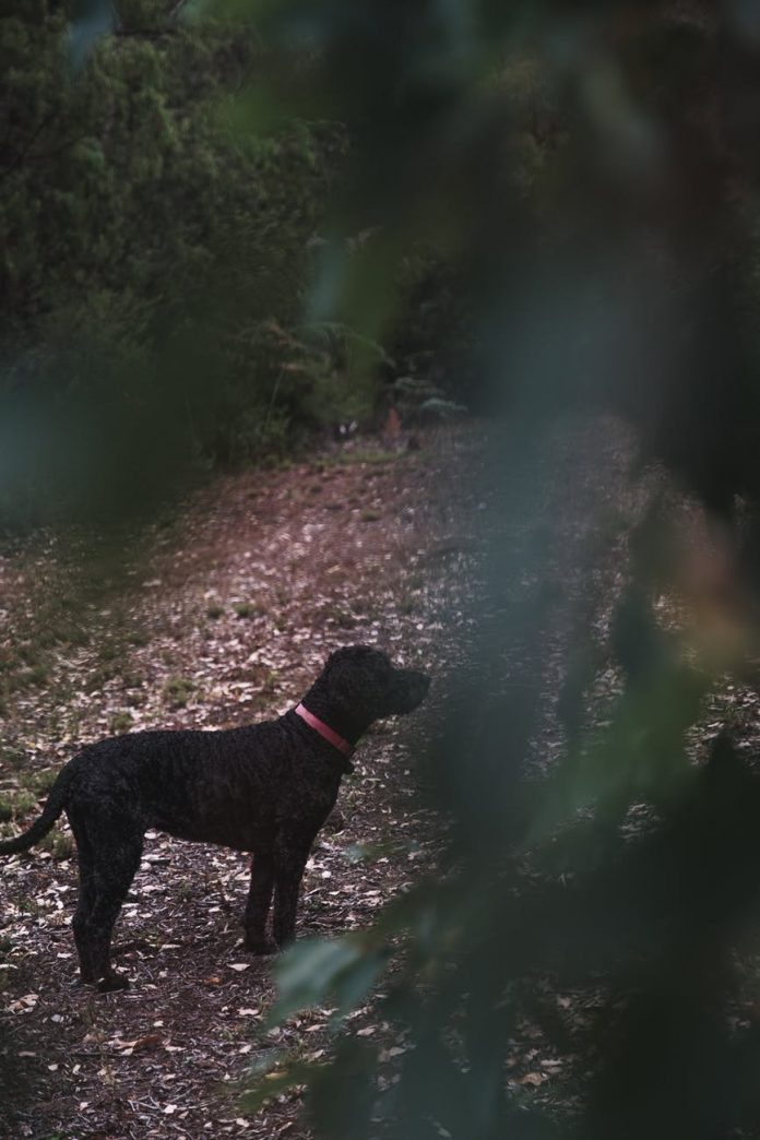 obedient curious dog standing in forest and looking away
