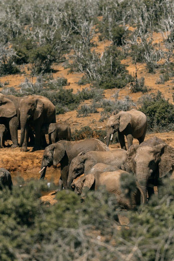 elephants and their habitat
