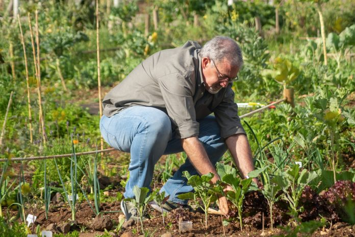 an elderly man in a vegetable garden