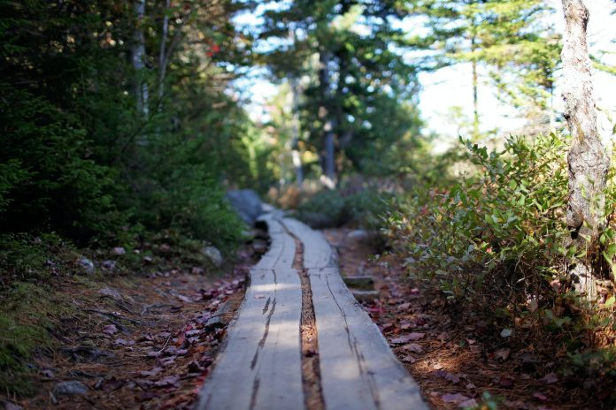 wooden path in green forest on sunny day